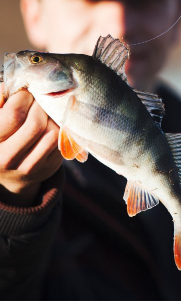 Up close image of man holding fish